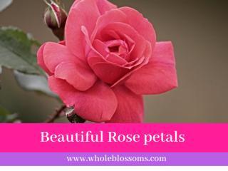 Rose petal.pdf